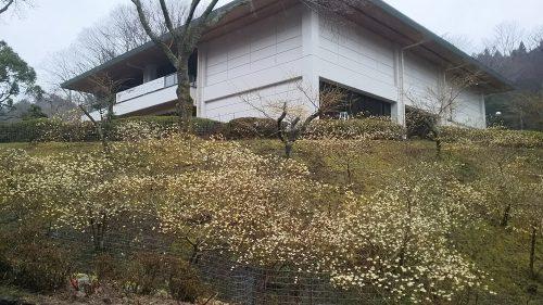 和紙のふるさと工芸館・展示館 休館のお知らせ