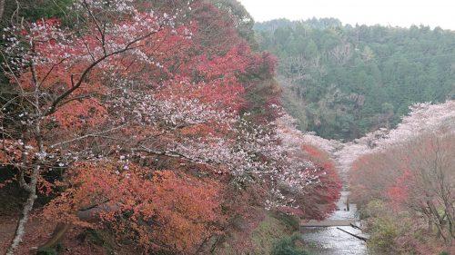 柿ヶ入り遊歩道